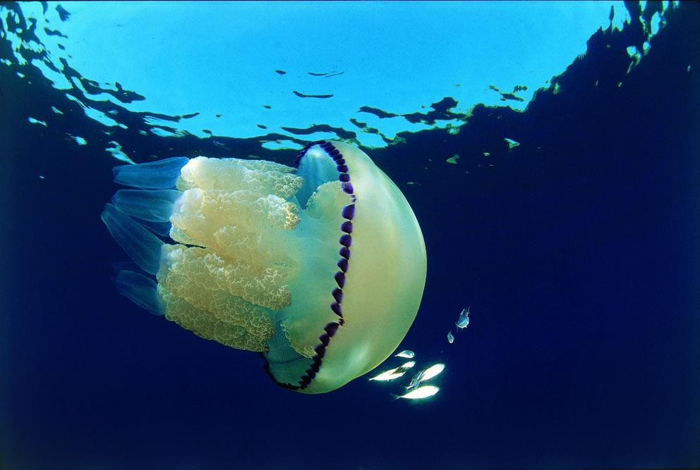 Quante meduse!