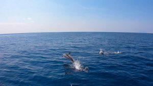 oceanoscientific expedition